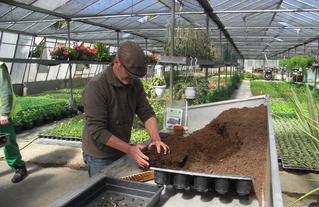 Mise en culture des graines du Sophora du Japon de Montry dans les Serres de Meaux. Une initiative d' Eric DEFER,  formateur-historien à l'EPIDE de Montry, soutenue par le CAUE77